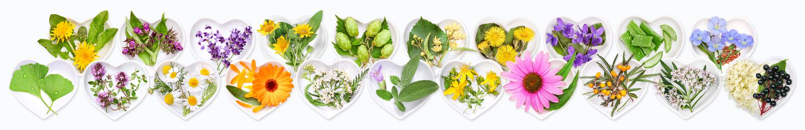 The most important medicinal plants stock photography