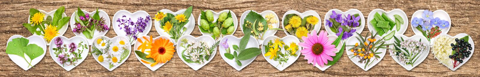 The most important medicinal plants stock photos
