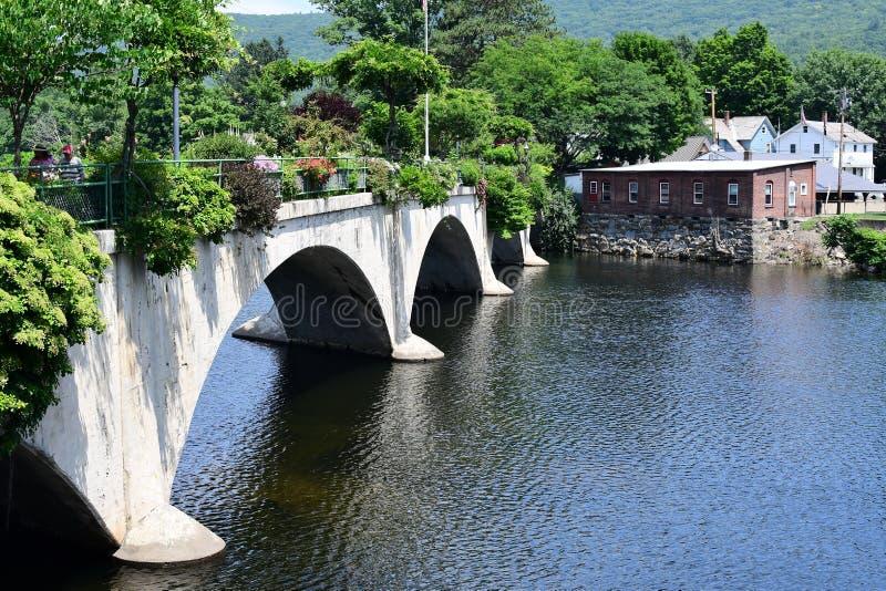 Most kwiat zdjęcie royalty free