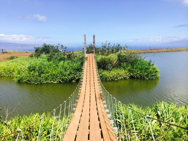 Most na jeziorze z pięknymi roślinami fotografia stock