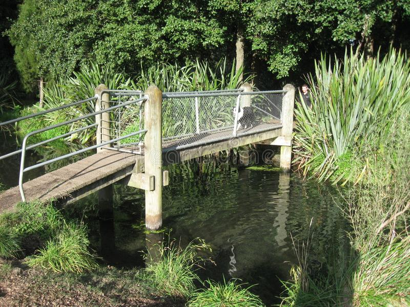 Most nad błotnistą wodą fotografia royalty free
