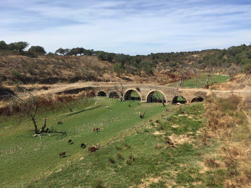 Most nad naturą obrazy royalty free