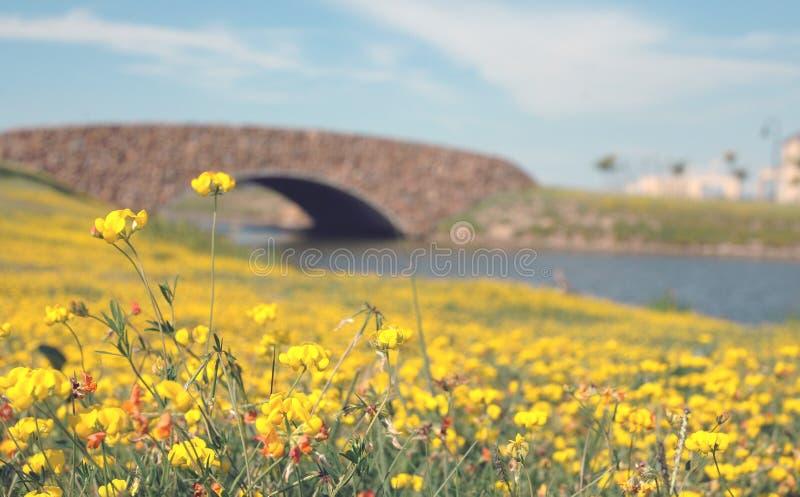 most pod wodą zdjęcia stock