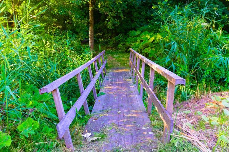 Most prowadzi w las obrazy stock