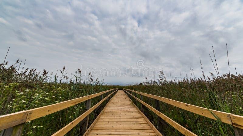 Most w bagnie obraz royalty free