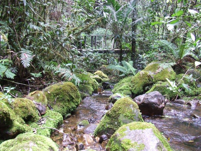 Most w Kolumbijskich dżunglach zdjęcia royalty free