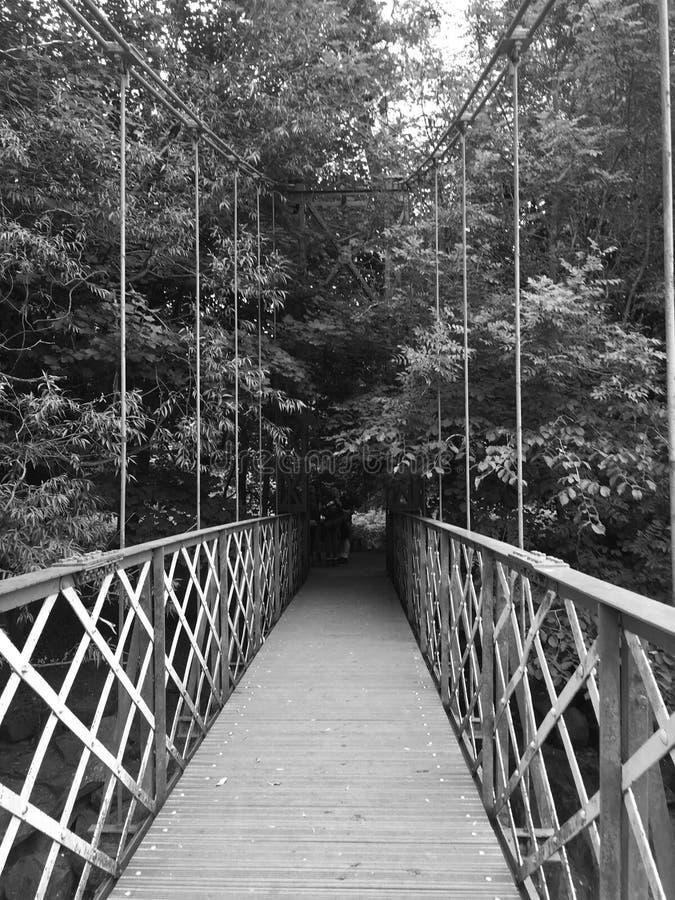 Most w las obrazy royalty free