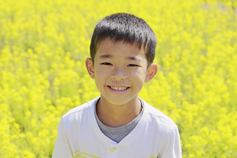 Mostarda japonesa do menino e de campo foto de stock royalty free