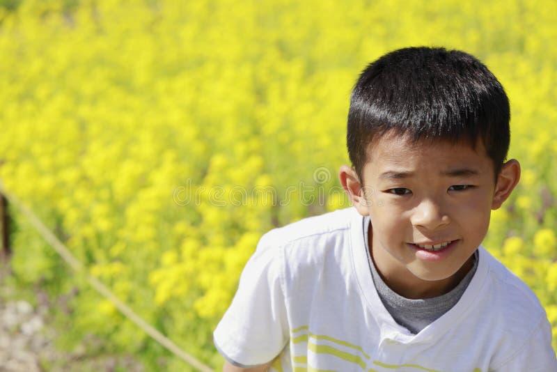 Mostarda japonesa do menino e de campo imagem de stock royalty free