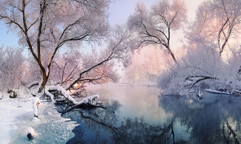 Mostly calm winter river, surrounded by trees covered with hoarfrost and snow that falls on a beautiful pink morning lighti royalty free stock photography