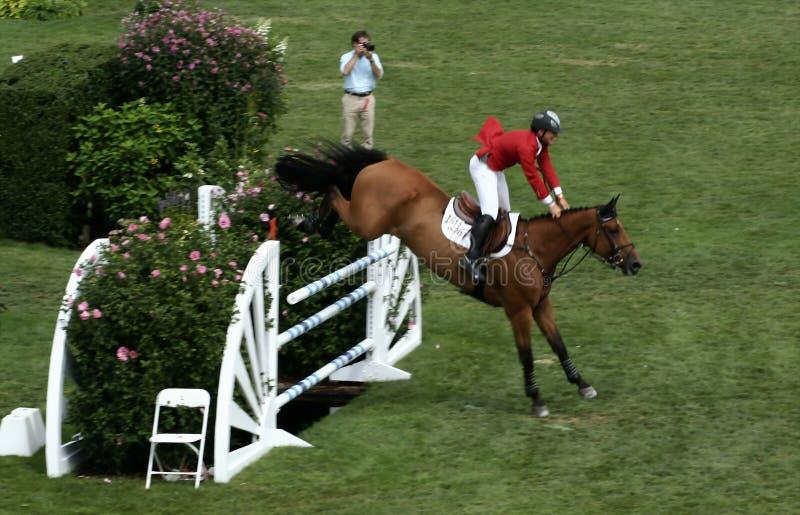 Mostra clássica do cavalo de Hampton imagens de stock royalty free