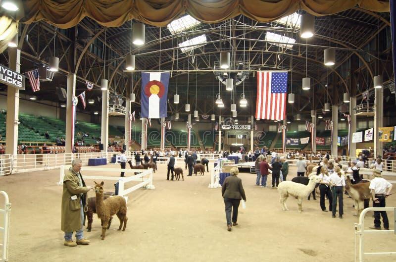 Mostra da alpaca de Great Western imagem de stock royalty free