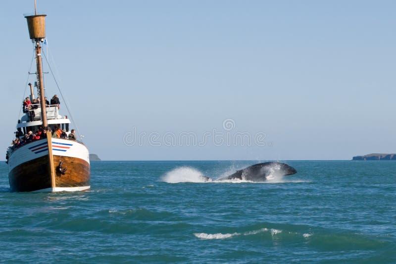 Mostra da baleia foto de stock royalty free