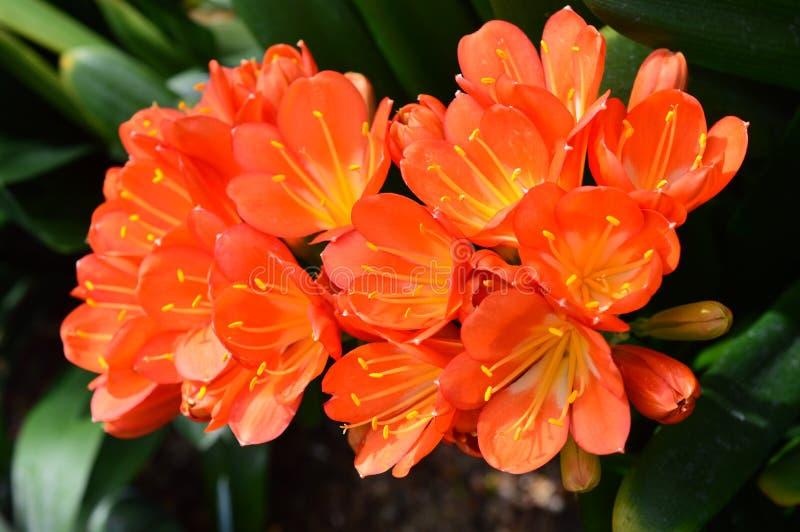 Mostra da orquídea do jardim botânico de Chicago fotografia de stock