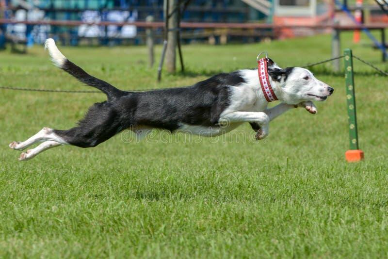 Mostra de cães imagem de stock royalty free