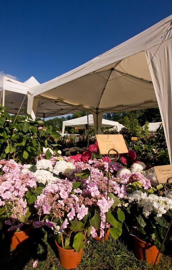 Mostra de flor fotografia de stock royalty free