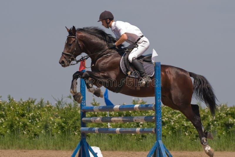 Mostra de salto do cavalo fotografia de stock