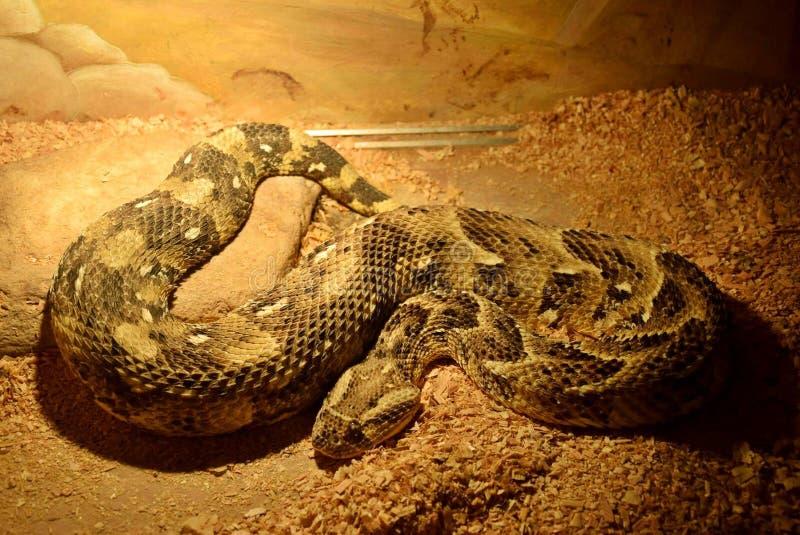 Mostra dei serpenti immagini stock libere da diritti