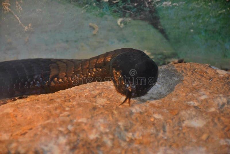 Mostra dei serpenti fotografie stock libere da diritti
