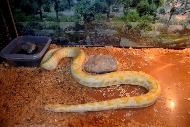 Mostra dei serpenti fotografie stock