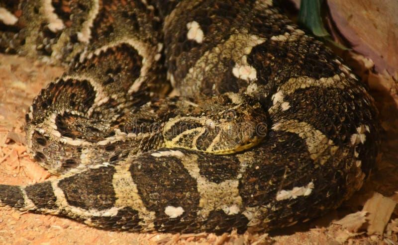 Mostra dei serpenti tossici, l'8 settembre immagine stock