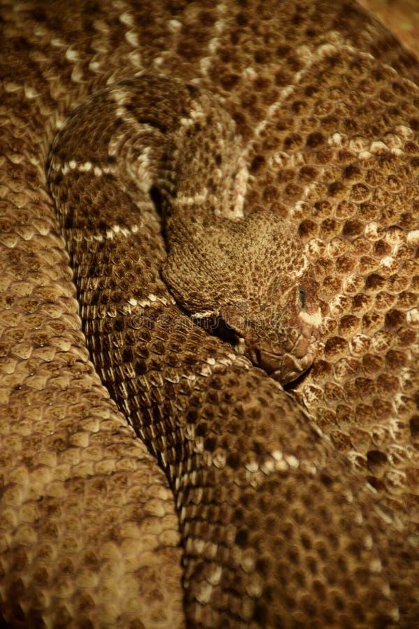 Mostra dei serpenti tossici, l'8 settembre fotografia stock
