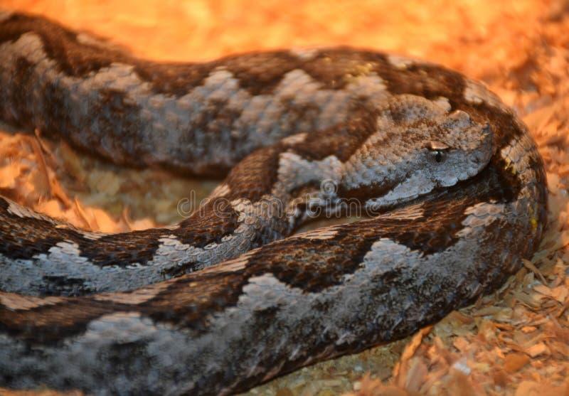 Mostra dei serpenti tossici, l'8 settembre immagini stock