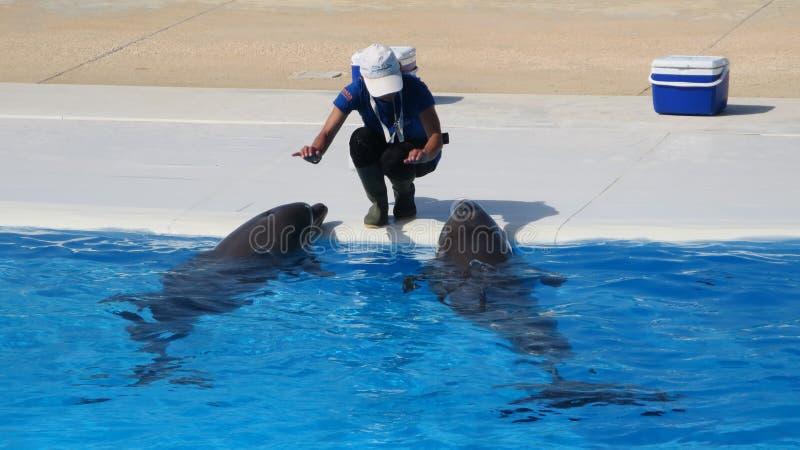 Mostra do golfinho em Malta fotos de stock royalty free