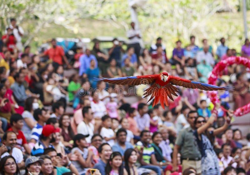 Mostra do pássaro no parque do pássaro de Jurong, Singapura fotografia de stock