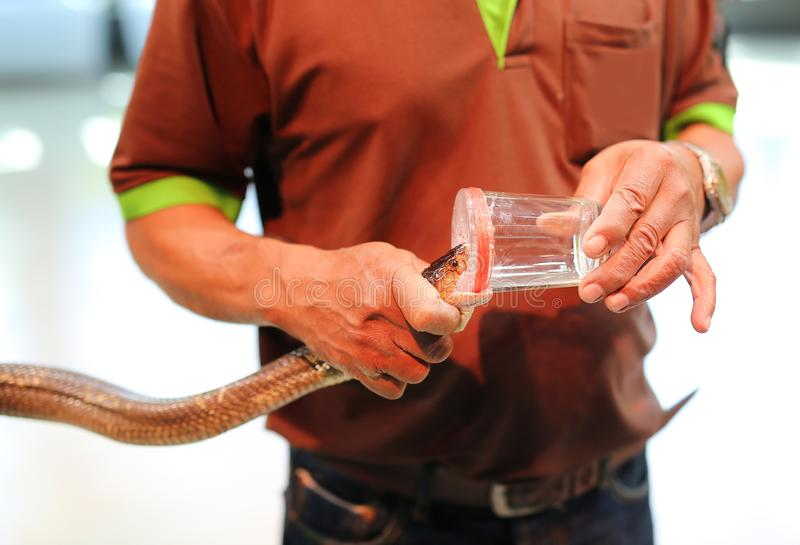 Mostra do veneno da serpente no jardim zoológico Tailândia fotografia de stock