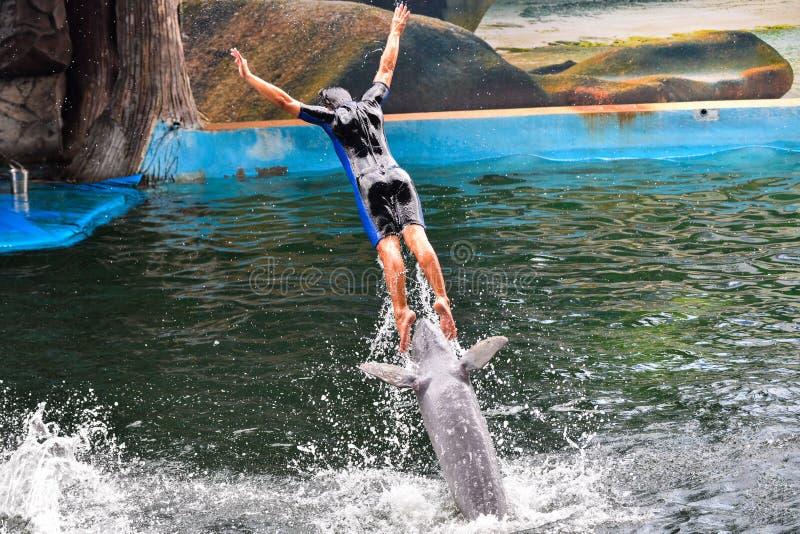 Mostra dos golfinhos foto de stock