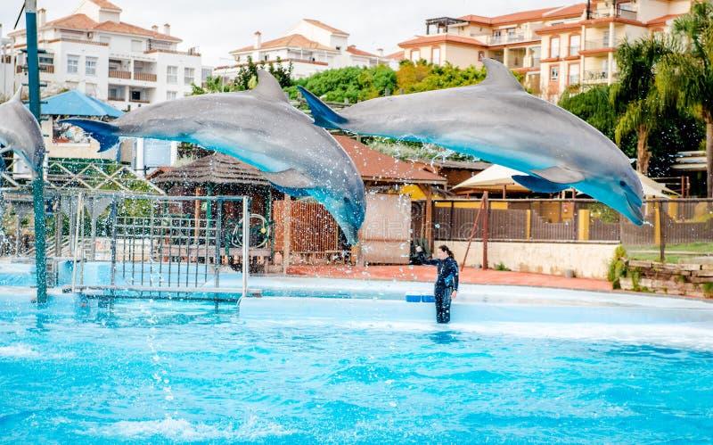 Mostra dos golfinhos no porto de Selwo foto de stock