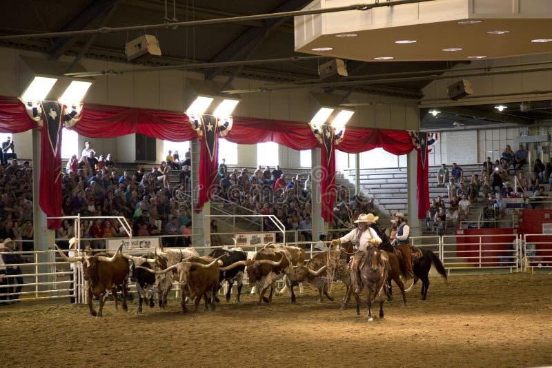 Mostra solitária do debandada da estrela no estado Texas justo imagem de stock royalty free