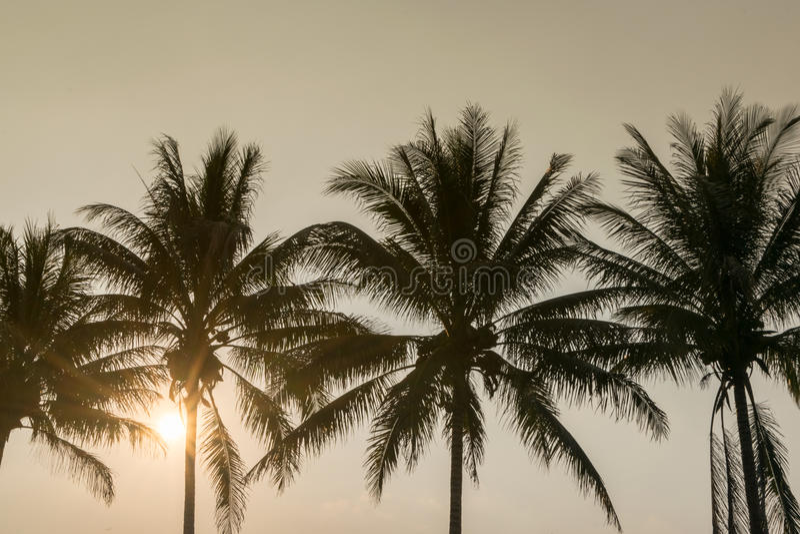 Mostre em silhueta a árvore de coco no tempo tropical do por do sol da costa, fundo do verão fotografia de stock royalty free