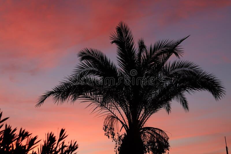 Mostre em silhueta as folhas de palmeira uma em nuvens do por do sol foto de stock royalty free