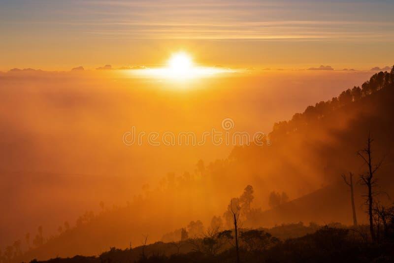Mostre em silhueta a cordilheira e a floresta com luz solar amarela no nascer do sol fotografia de stock