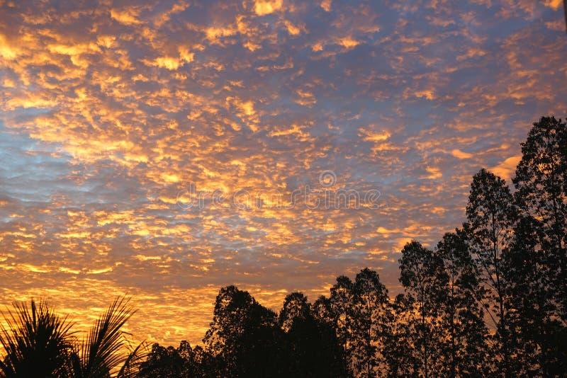 Mostre em silhueta a fileira das árvores no céu alaranjado colorido dramático da cor fotos de stock royalty free
