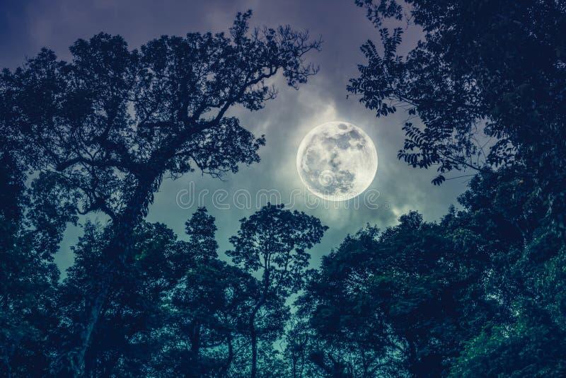 Mostre em silhueta os ramos das árvores contra o céu noturno com MOO completo fotografia de stock