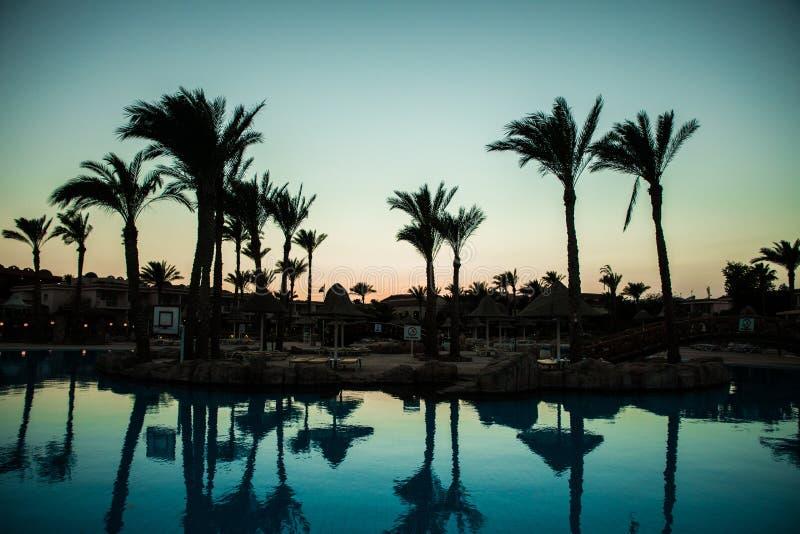 Mostre em silhueta a palmeira com a associação da cadeira do guarda-chuva no recurso do hotel de luxo em tempos do nascer do sol  imagens de stock
