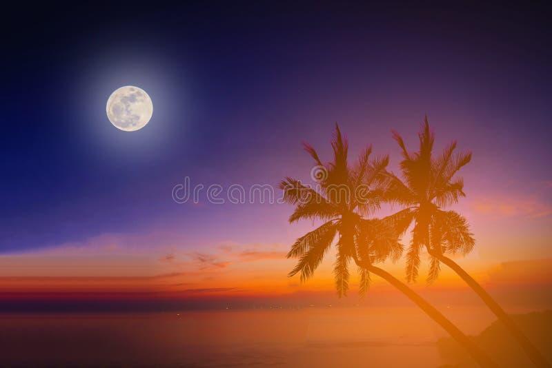 Mostre em silhueta palmeiras do coco na praia com a lua foto de stock royalty free