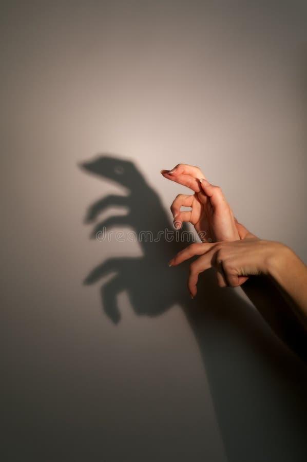 Mostre em silhueta a sombra do lagarto foto de stock