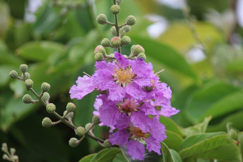 Mostre a flor imagens de stock