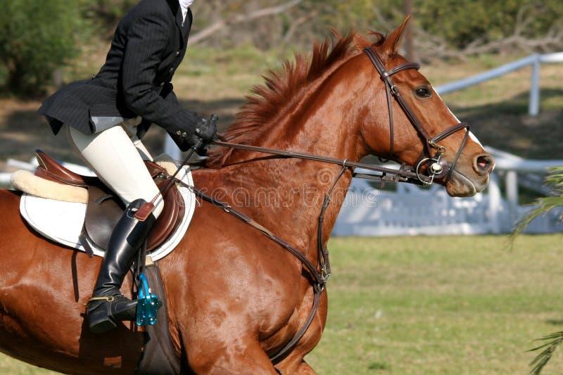 Mostre o cavalo e o cavaleiro fotografia de stock royalty free