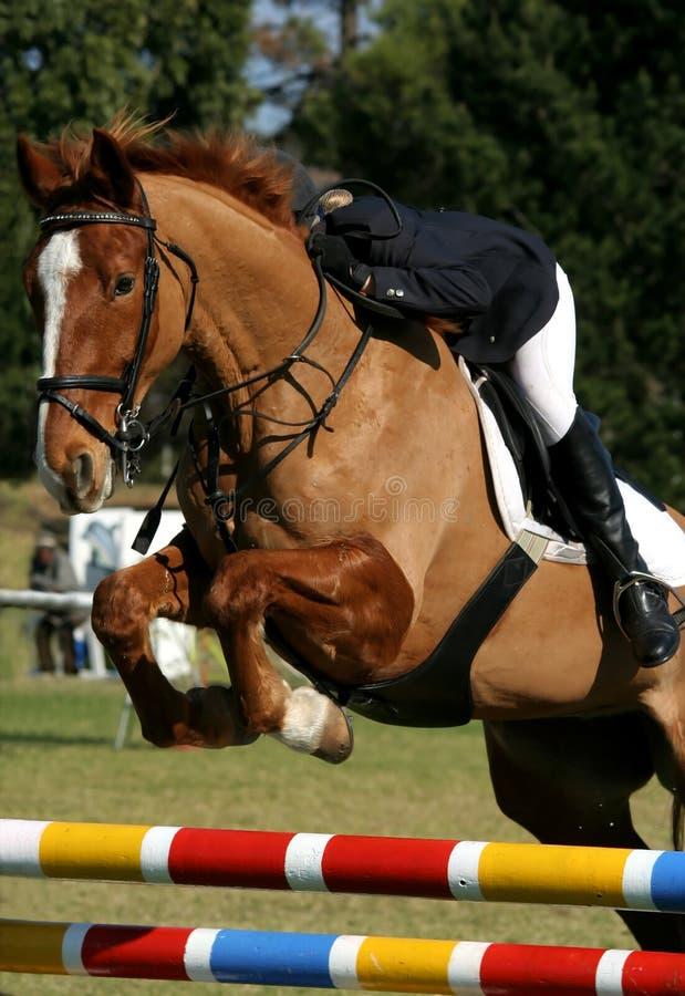 Mostre o cavalo e o cavaleiro de salto imagens de stock royalty free