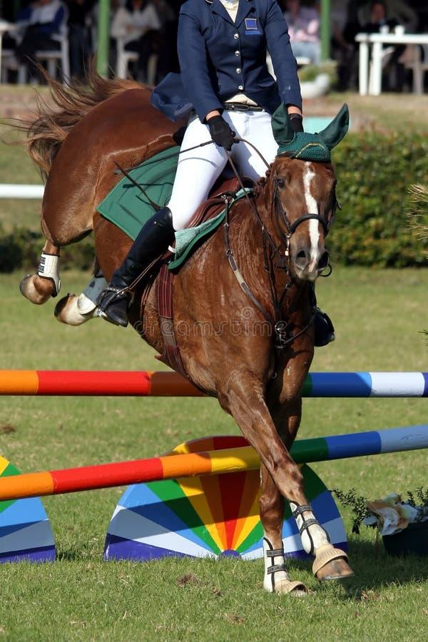 Mostre o cavalo e o cavaleiro de salto imagem de stock