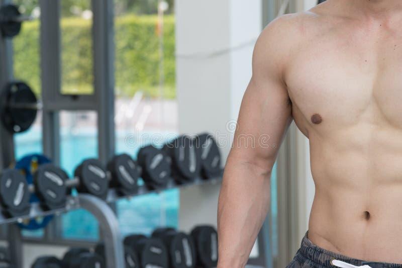 Mostre o corpo dos músculos do homem considerável no gym ou no fitness center, imagens de stock