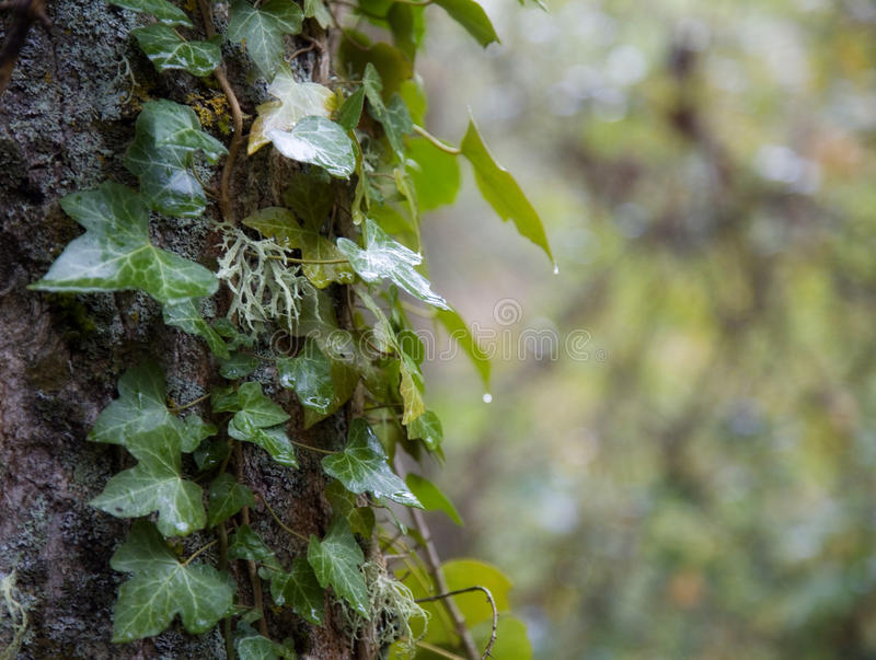 mot bakgrund field blåa oklarheter för grön vitt wispy natursky för gräs royaltyfri foto
