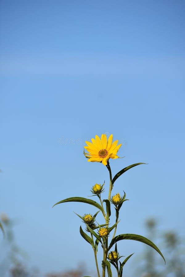 mot blå blommaskyyellow arkivfoto