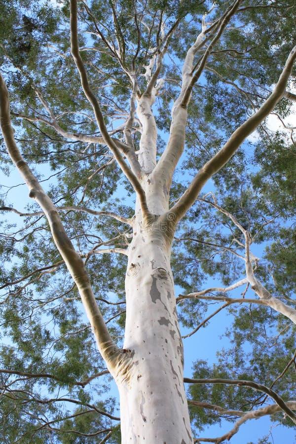mot blå tree för spökegummisky arkivbilder
