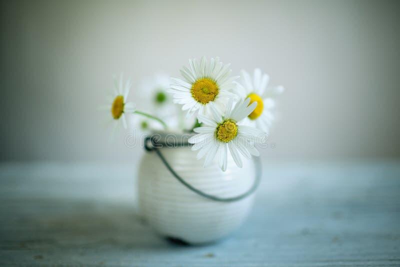 mot blå tusensköna blommar skyyellow royaltyfri bild